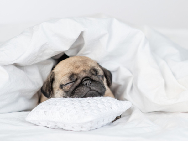 快眠できる枕選びとは?