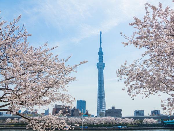 隅田川沿い桜散歩と江戸切子体験