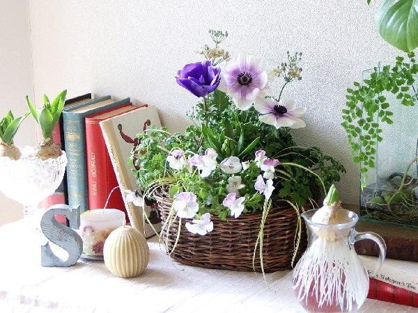 冬は「芽出し球根」の寄せ植えで春を先取り!
