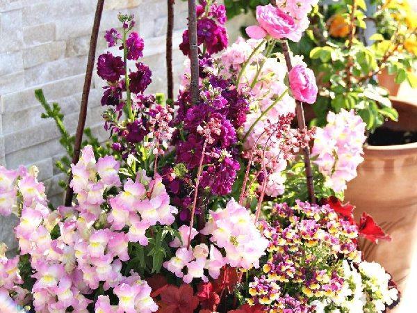 春の寄せ植えの準備