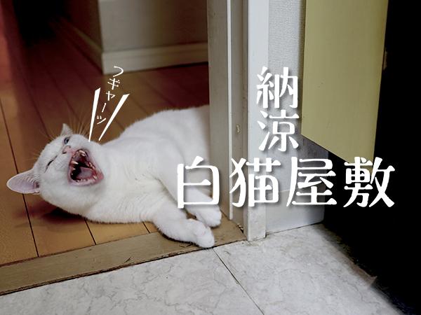 納涼白猫屋敷へようこそ