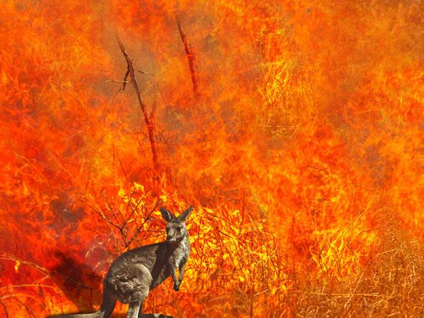オーストラリアの森林火災から地球温暖化を考えよう