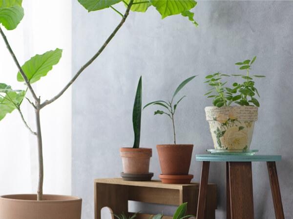 あなたにおすすめの観葉植物を診断!飾るコツも