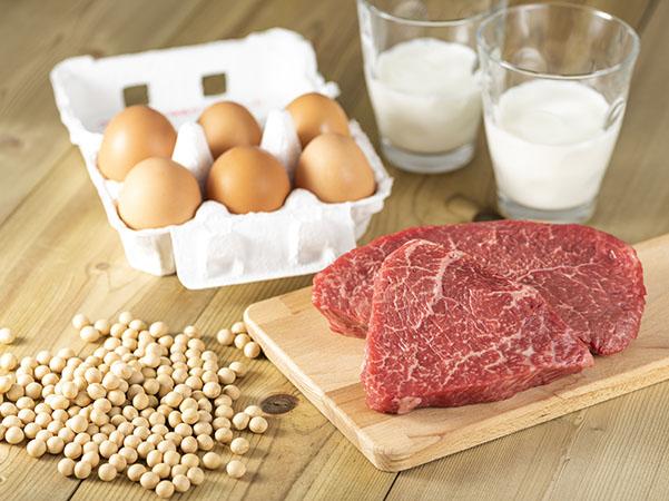 タンパク質の摂取量