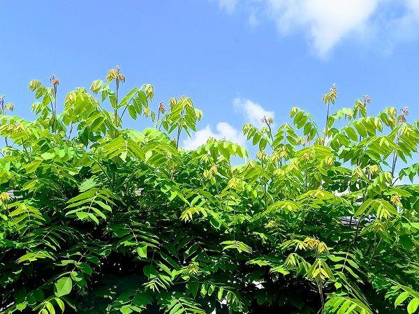 我が家の庭は、狭いながらも天然の林です