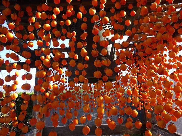 秋の風物詩、市田柿と山の寺