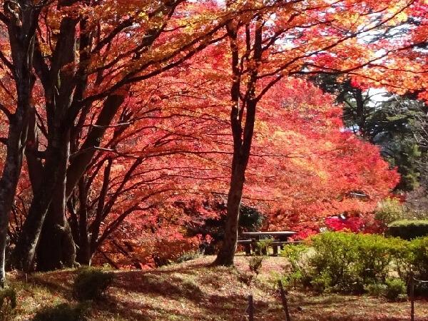 野底山の美しい紅葉