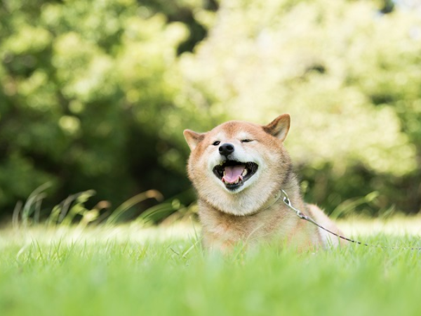 憧れの犬との生活を夢見て