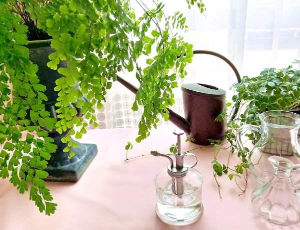 室内で楽しむ観葉植物12種、私の選び方育て方