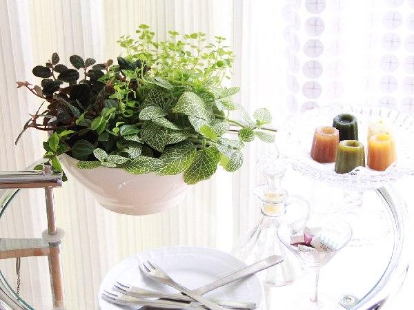 観葉植物の飾り方15のアイデア