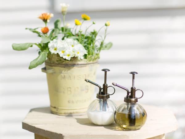 農薬を使わないアブラムシ対策に木酢液と牛乳