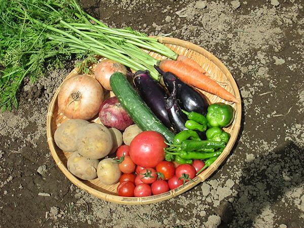 楽しみながらの家庭菜園