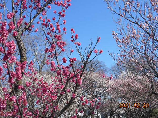 春を見つけに~季節を感じるご近所探訪~