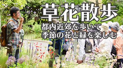 清右衛門の草花散歩