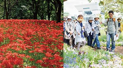 野川公園の紅白ヒガンバナと武蔵野の森公園
