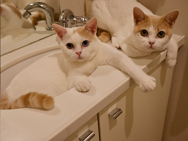 保護猫兄弟!日々ねこたま1