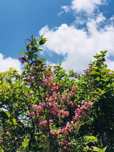 花も鮮やか。