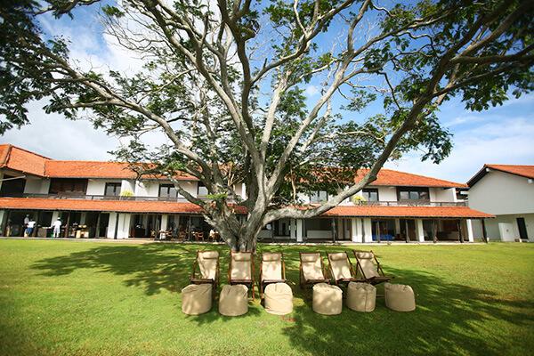 バワが好きだったプルメリアの木が植えられたラグーン前のガーデン