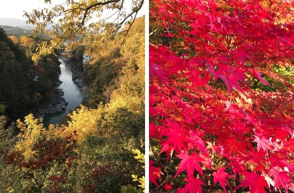 (左)木々の隙間から見える天竜川(右)紅葉真っ只中の天竜峡