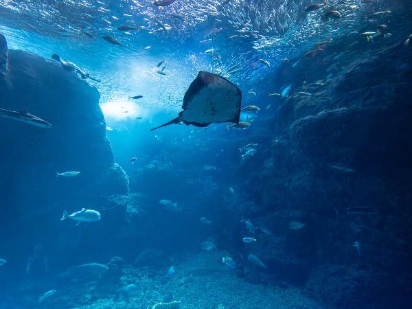 深海魚ってどうやって生活してるの?