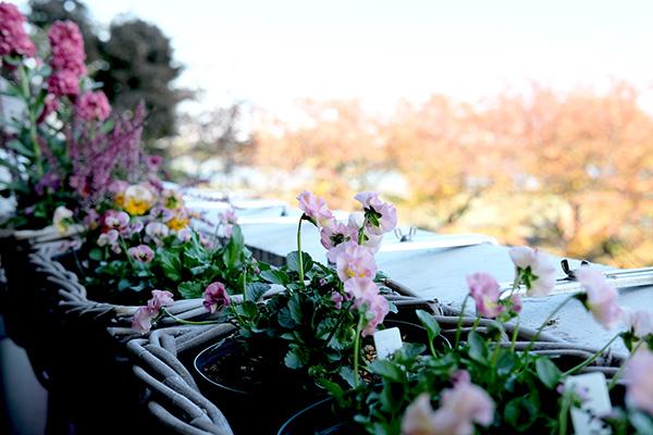 花を長く楽しむコツ