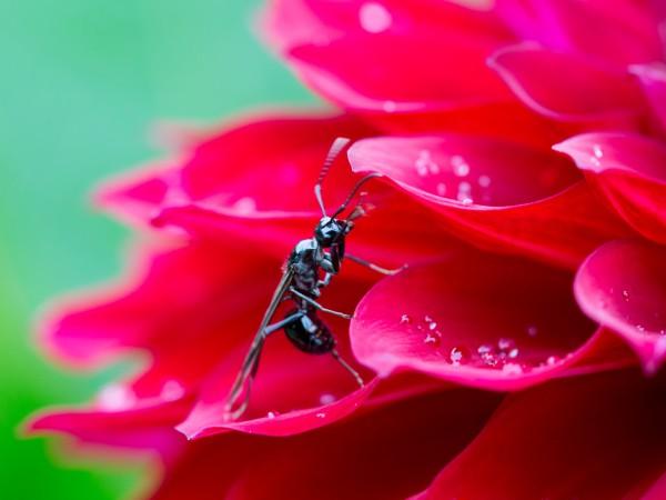 女王アリの寿命は10年以上!その不思議な生態とは?