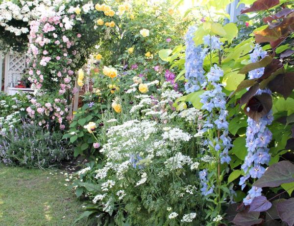 秋に種蒔きして春に咲く花おすすめ4種