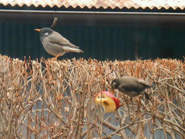 柚子とミカンと小鳥と私