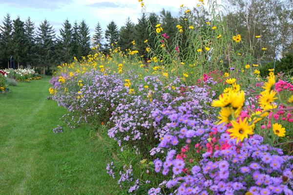 紫竹ガーデン|60代から作り始めた夢の野原