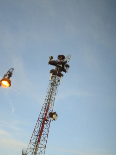 バスが走る通り沿いの鉄塔にコウノトリの巣