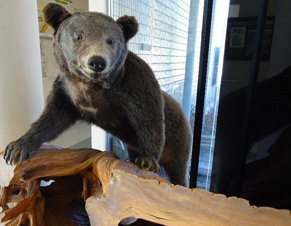入り口には熊が