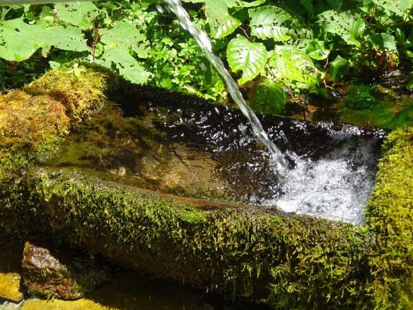 命水 一本木