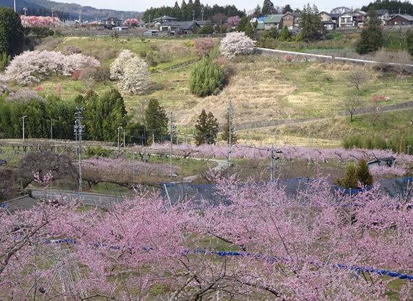 桃の花、桜、花桃などが咲き乱れる