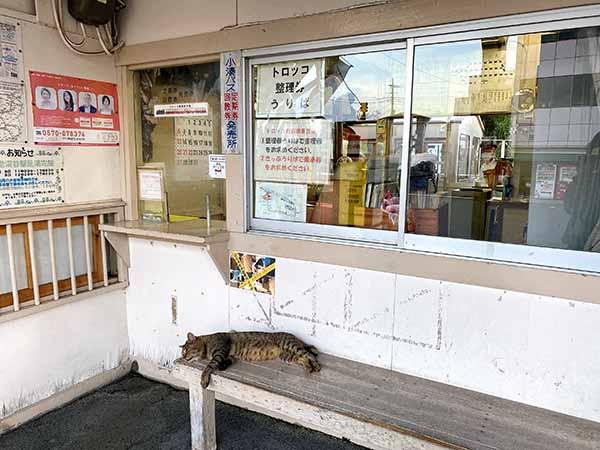 上総牛久駅にいた猫