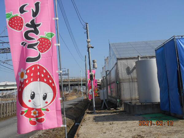 イチゴ農園の旗とハウス