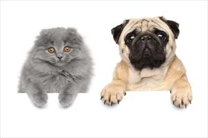 犬や猫も花粉症になるって本当?
