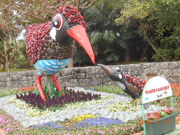 沖縄の県鳥 ヤンバルクイナの親子
