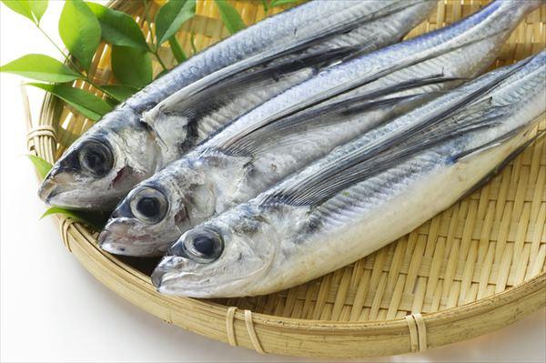 漁協おすすめ!夏が旬の魚(トビウオ)