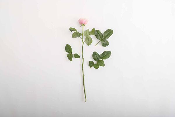 一輪咲きバラ