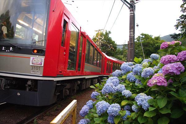 箱根登山電車アレグラ号と紫陽花