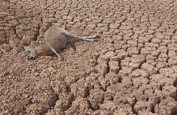異常な乾燥と高温が、森林火災を深刻化
