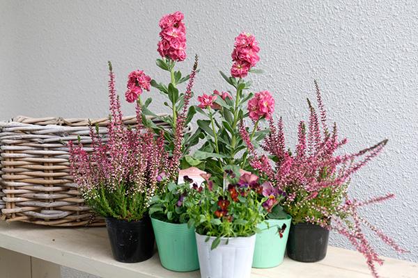 寄せ植えの花選び