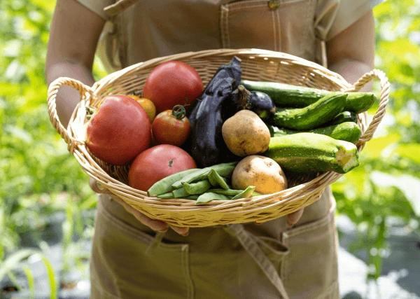 抗酸化作用がある野菜とフルーツ