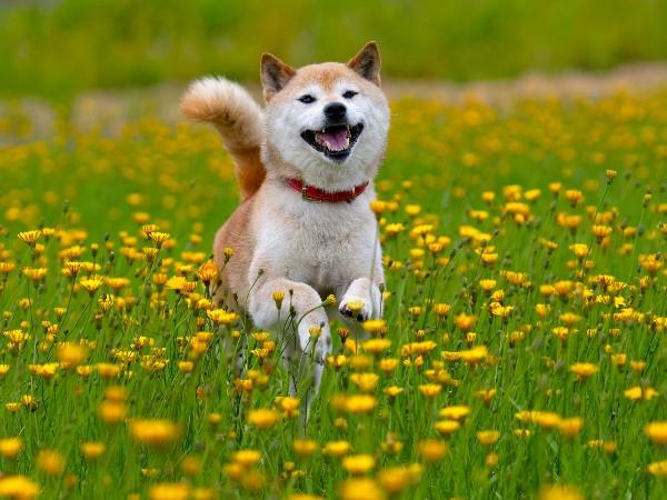 犬がしっぽをふりふりと振る理由とは?