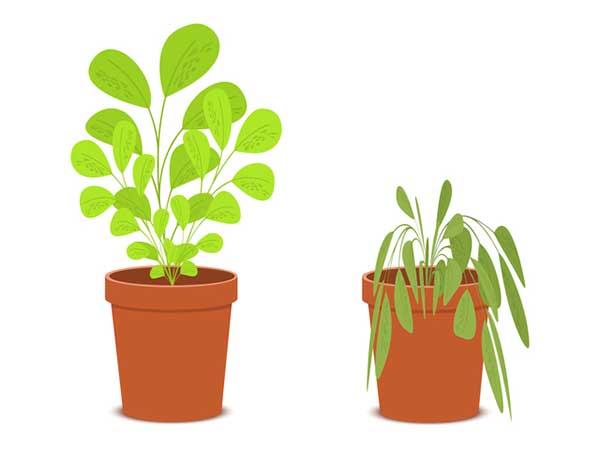 初心者が観葉植物を枯らさないための注意点と育て方のポイントは