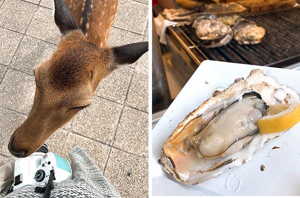 (左)カメラは食べ物ではありません(右)宮島名物・焼きガキ