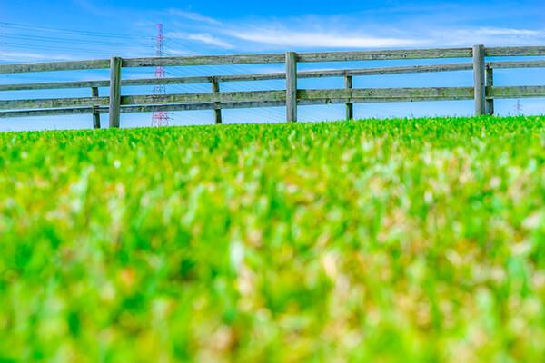 隣の芝生は青く見える