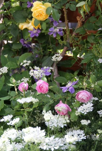 開花時期が4~6月の春の花オルラヤ