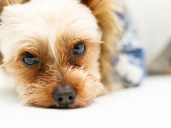 本当に飼いやすい犬種って何?