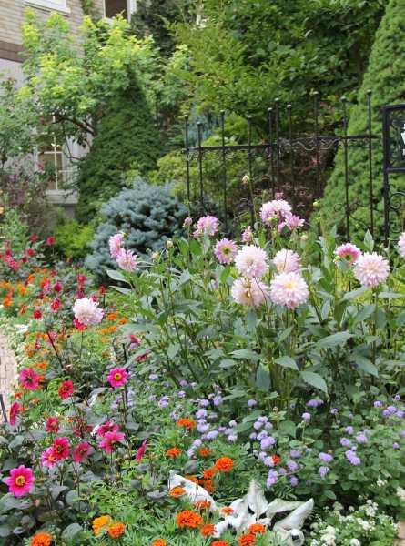 ラカスタ ファクトリーの花